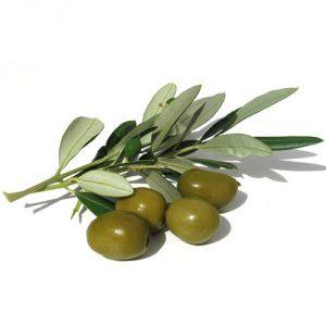 Консервы оливки